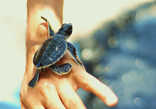 hand, life, turtle