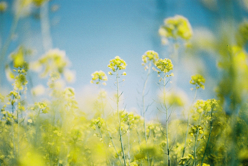 /tuesdayaffairs, flowers, photography, sky, summer