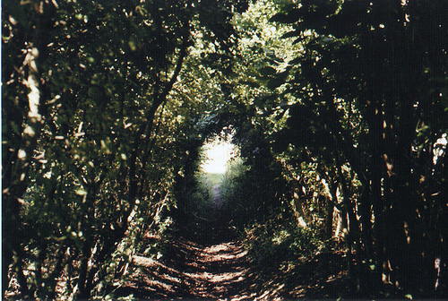 nature, photography, tunnel