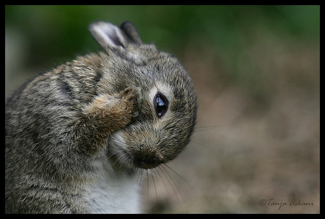 animal, baby, bunny, cute, little