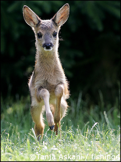 animal, cute, deer, fawn, nature