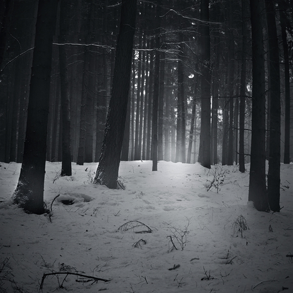 b&w, black & white, black and white, forest, snow, trees, winter, wood