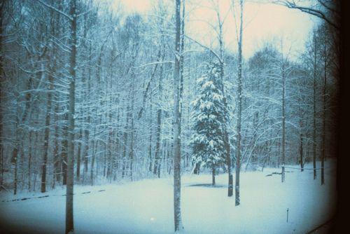 cold, forest, snow, trees, winter, woods