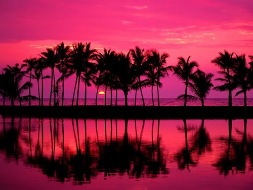pal tree, palm tree, pink, sunset