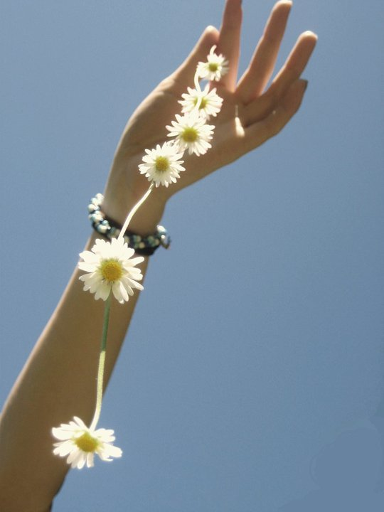 arm, chain, daisy, daisys, flower