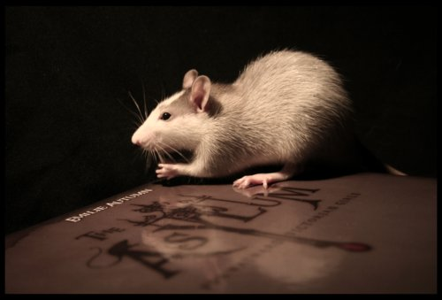 asylum, book, emilie autumn, gsayour, rat