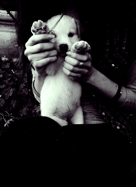 b&w, baby, black and white, cute, dog