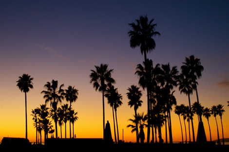 beach, california, palm trees, summer