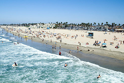 beach, california, palm trees, summer, swim