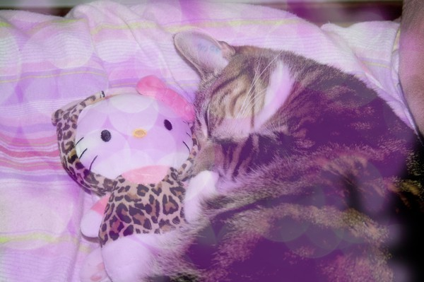 bokeh, cat, cute, hello, hello kitty