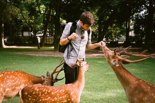 boy, cute, deer, veados haha