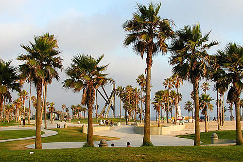 california, day, palm trees, sky, venice beach
