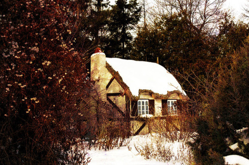 cottage, cozy, snow, trees, winter