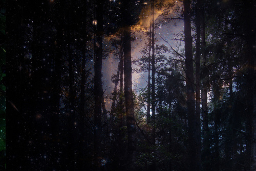 lights, night, pretty, sky, stars, woods