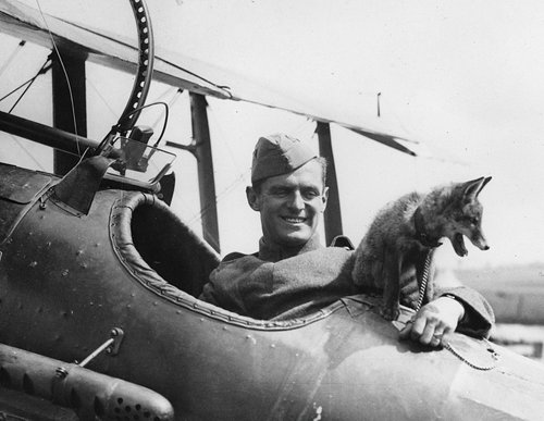 airplane, fox, pilot, raf, soldier