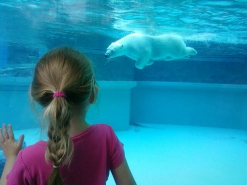 animal, child, cute, polar bear, underwater, water, zoo