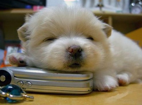 aww, cell phone, cute, dog, puppy