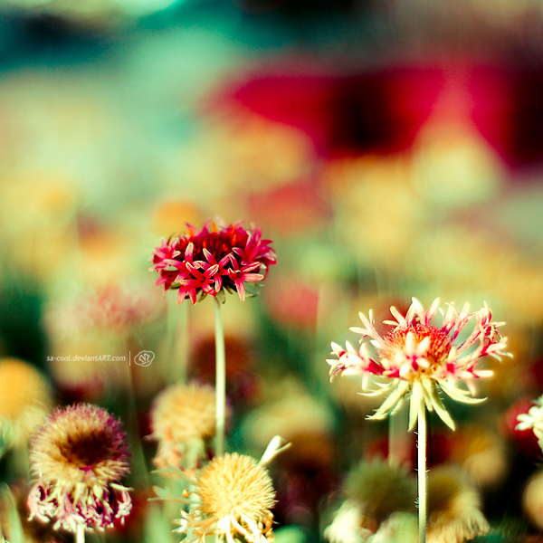 beautiful, colorful, flower, flowers, green