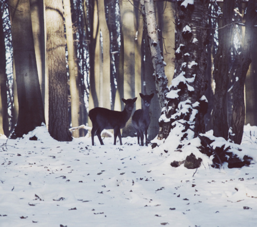 cute fawn photography vintage winter image 163618