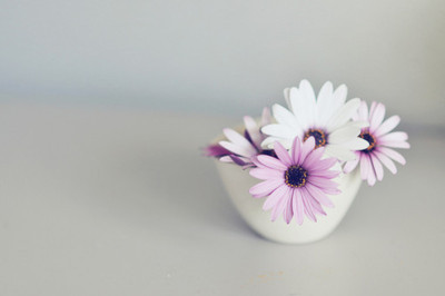flower, petals, purple, vase, white