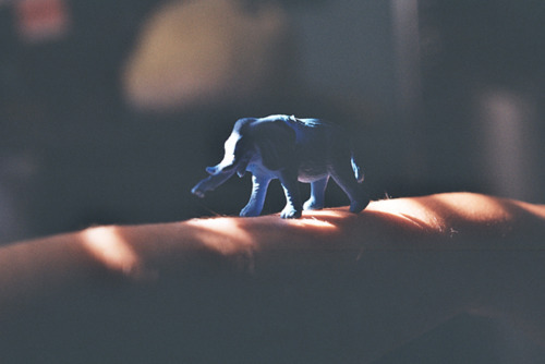 animal, blue, elephant, film, photography, shadows, thanu, vintage