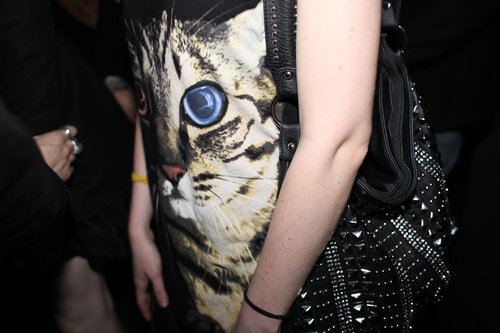 animals, cat, cats, fashion, girl