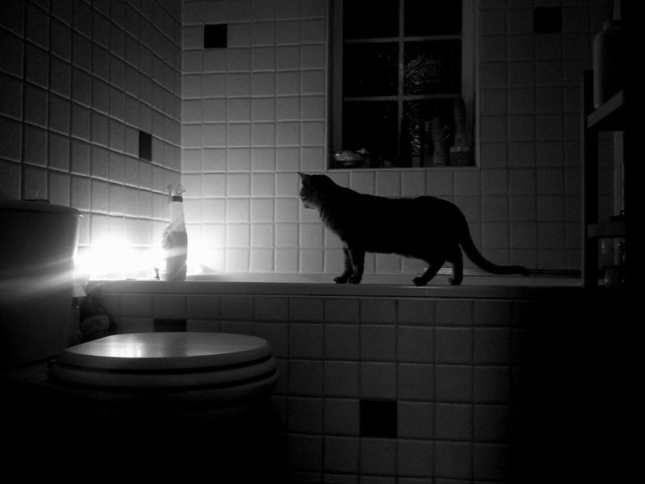 bathroom, cat, nice and photography
