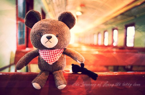 bear, cute, harry the teddy bear, journey, scarf