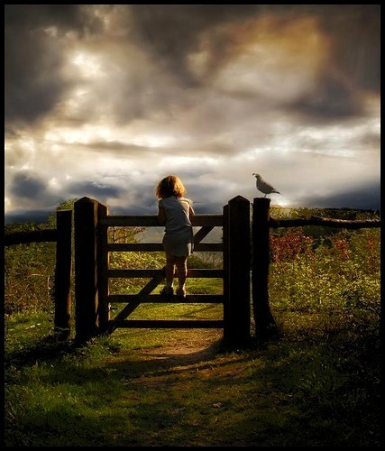 bird, child, photography, waiting