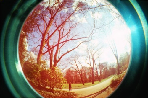 fisheye, lomo, tree