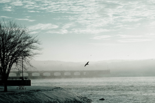 beach, bird, bridge, cute, fly