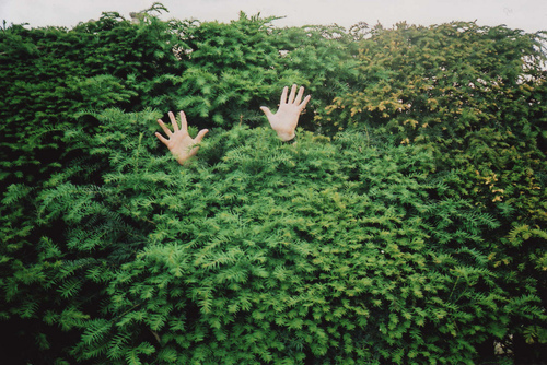 cool, green, hands, nature, photography