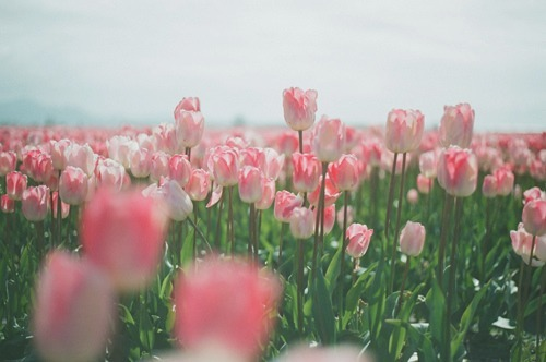 floral, flowers, photography, pink, pretty - image #168478 ...
