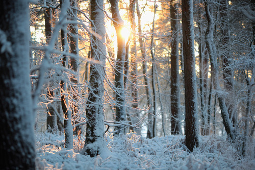 forest, photo, photography, snow, sun