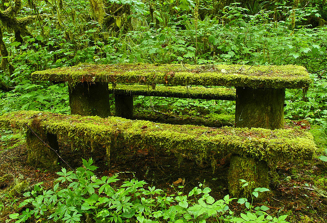 green, moss, nature, overgrown
