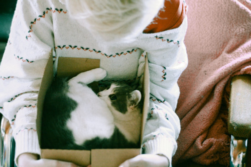 animal, blanket, blonde, box, cat, girl, kitten, kitty, sweater