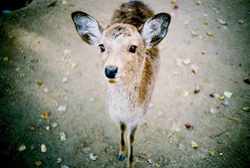 animal, cute, deer