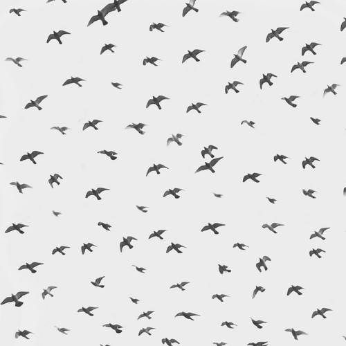 art, bird, birds, black and white, photo