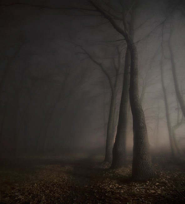 branches, dark, fog, forest, light