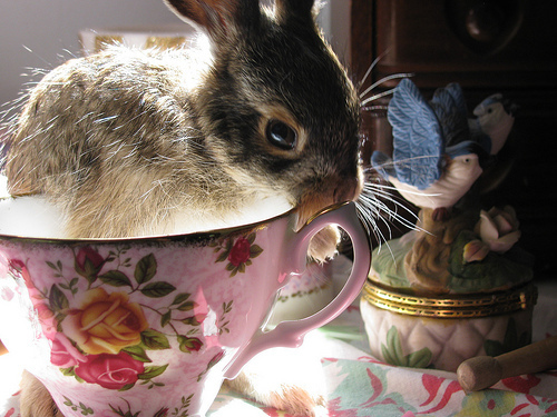 bunny, rabbit, teacup