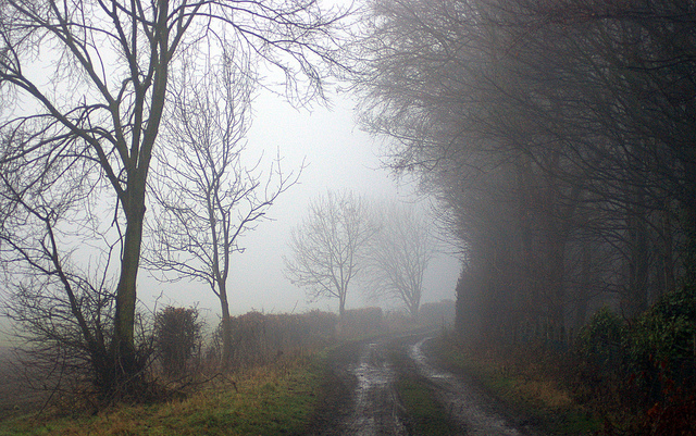 country, countryside, dirt road, fog, nature