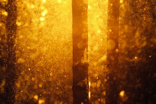 forest, gold, golden, light, snow, sun, trees