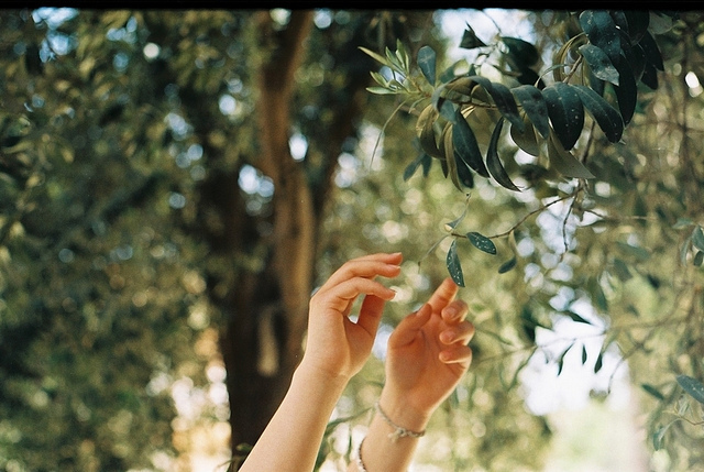 hands, nature, photography, trees, vintage