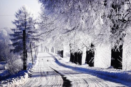 nature, photograph, photography, road, snow, trees, white, winter